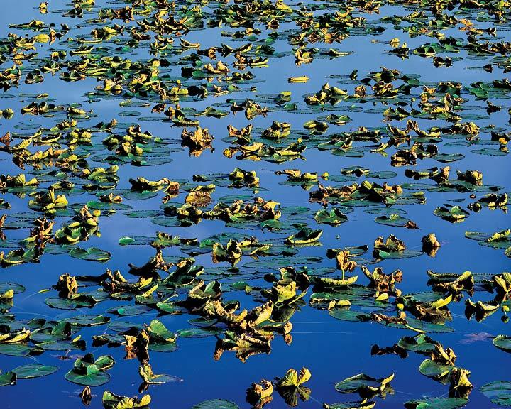 Late summer pond oregon