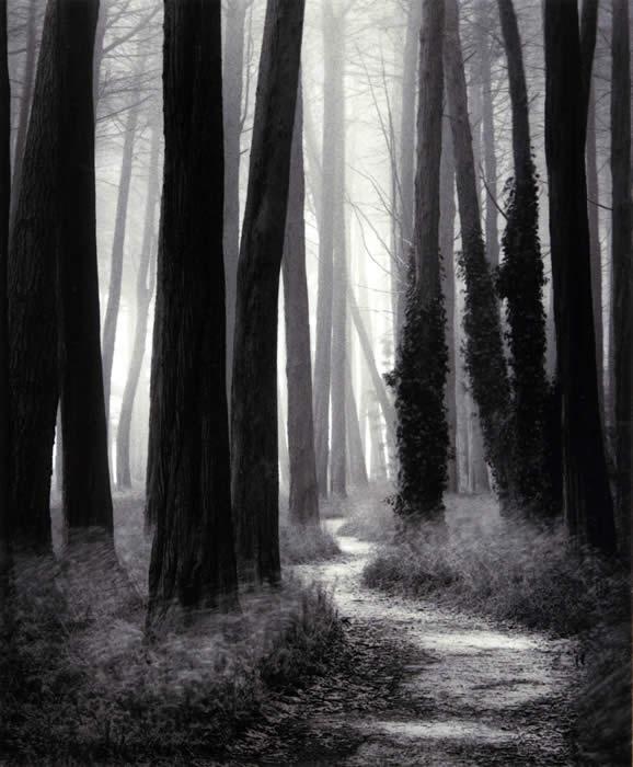 William Scott - Winding Path